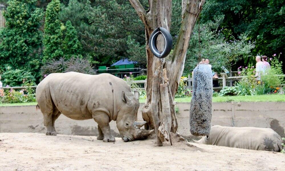 Rhino at Seneca Park Zoo