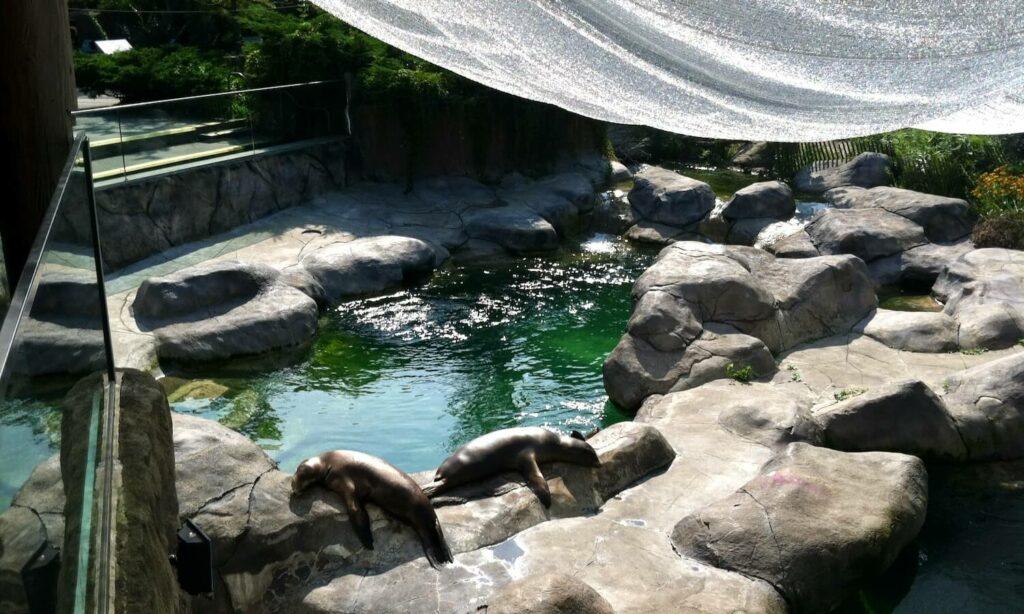 Seals at Seneca Park Zoo