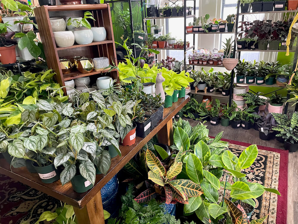 Tables and shelves full of various tropical plants