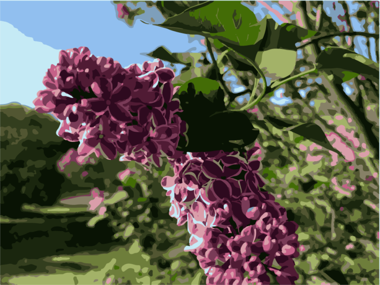 Purple and white Lilacs at Highland Park